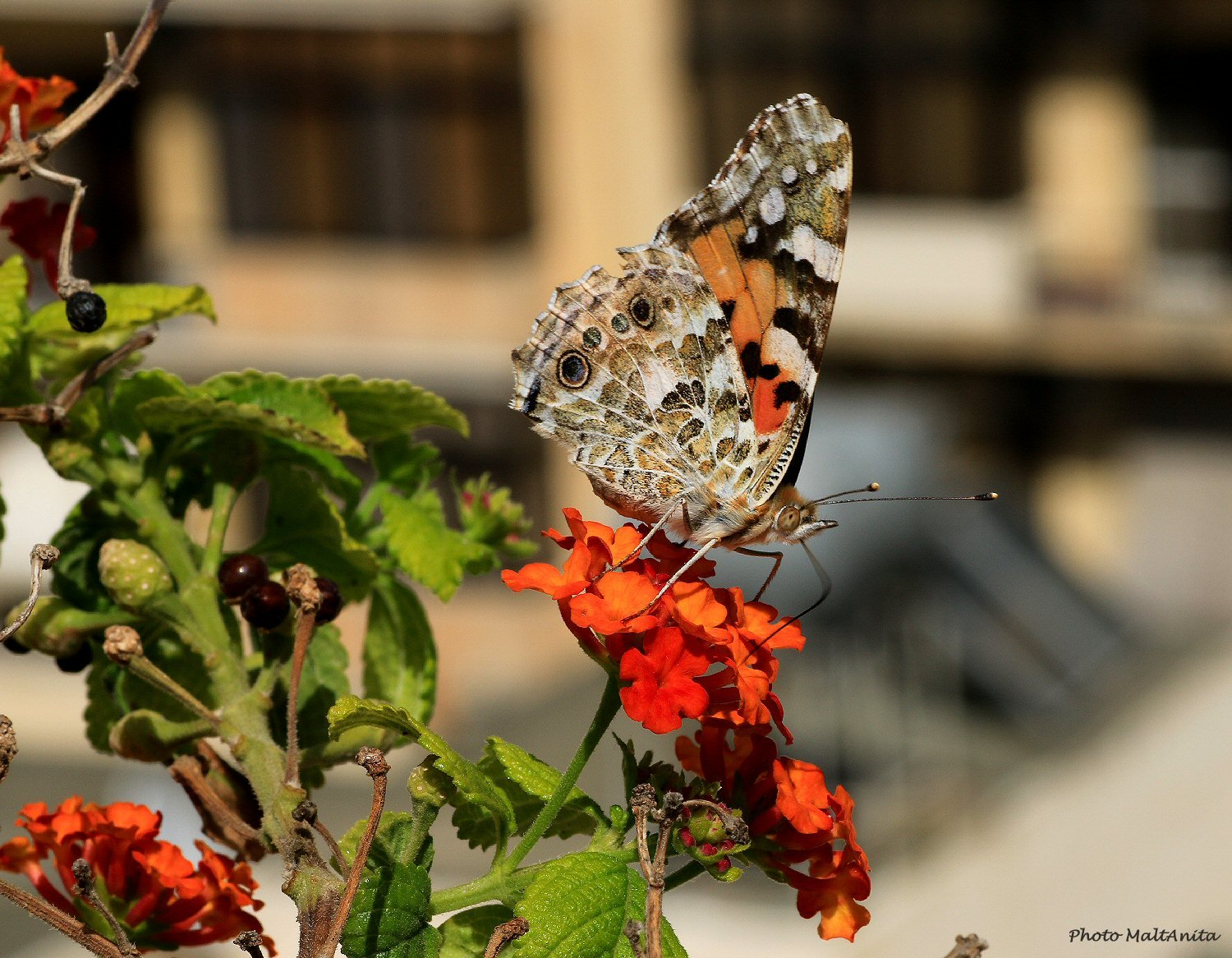 IMG_8716-PS