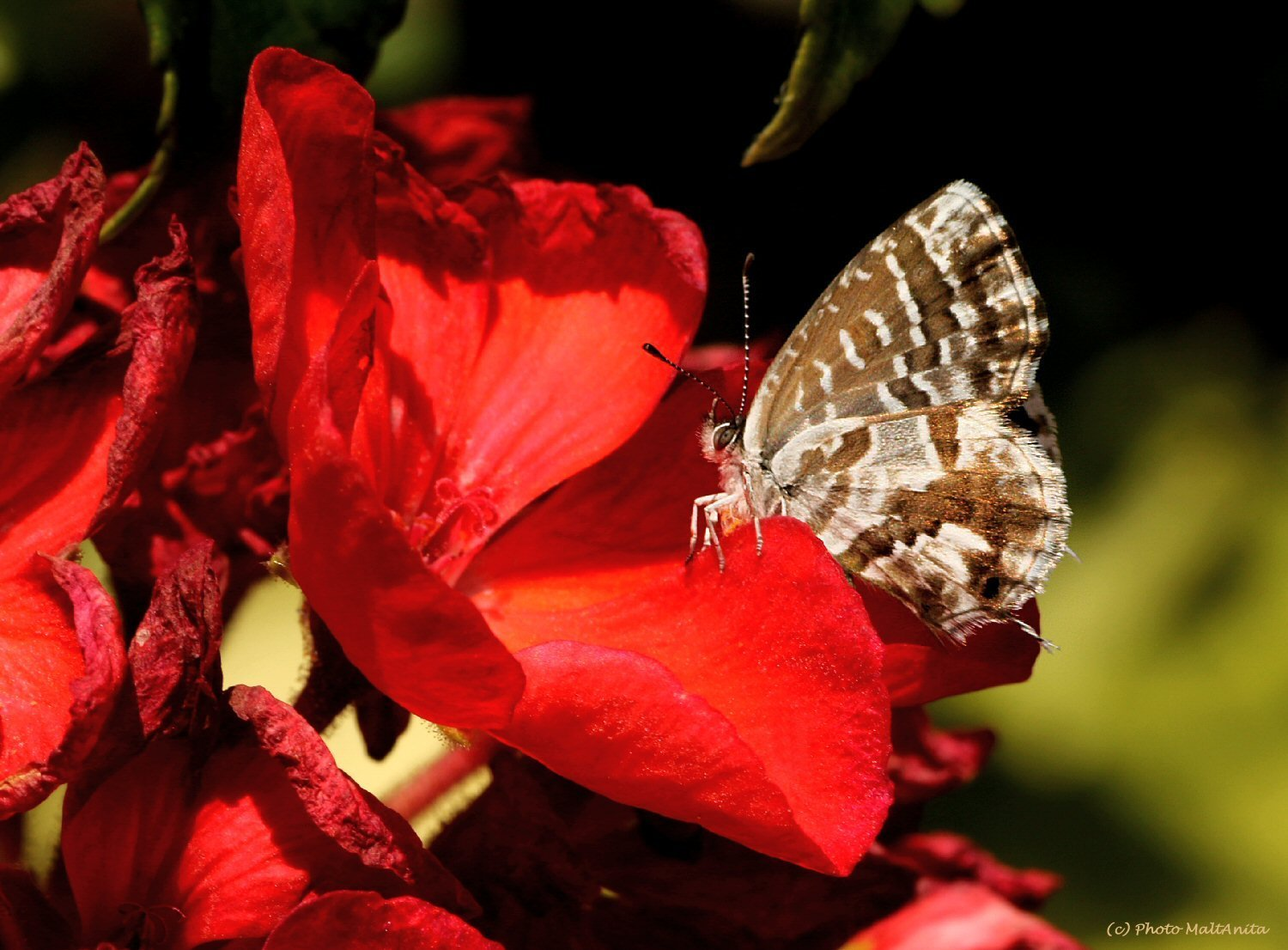 IMG_1146-1-PS