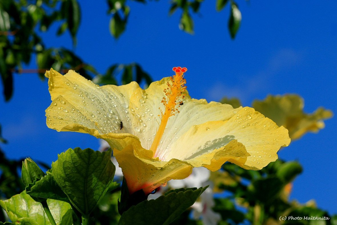 img_1676-1-ps