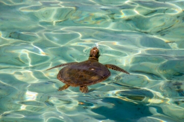 Here you will find lots of turtles. Both in the water and on land where they lay their eggs.