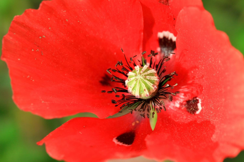 Wild Flowers Anitas Images