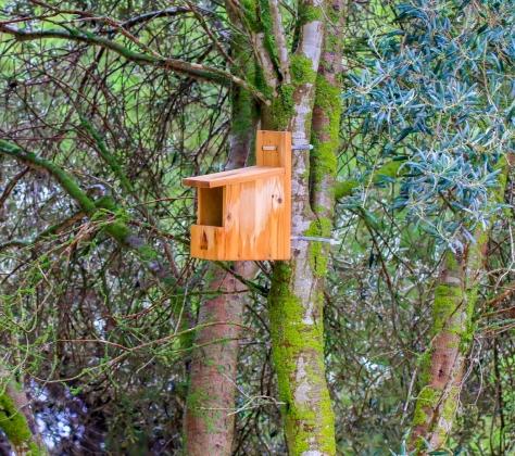 Många olika fågelarter finns det i parken och här ser det ut att vara ett nybygge. Betydligt lättare att fotografera än fåglarna :-)
