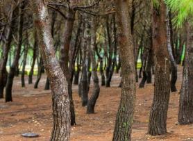 Det finns många oliks slags träd i parken såsom Olivträd och Pinjé plus många som jag inte kan namnen på..