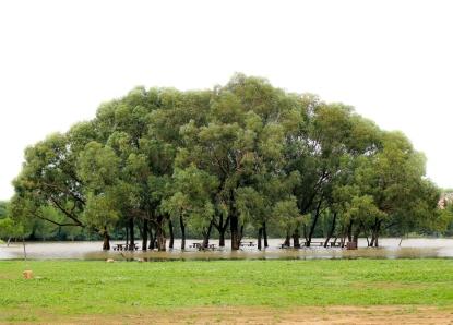 Efter några dagar med regn har det bildats som en sjö runt träden och det tog flera dagar innan det hade runnit undan. Titta noga så ser du att vattnet når upp till hälften av bänkar och bord där många brukar ha pick nick.